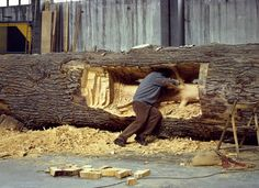 giuseppe penone, 'cedro di versailles', 2000-2003 cedar wood, 630 x 160 cm photographic documentation courtesy the artist photo © archivio penone