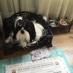 Chanel aproveitando as instalações do Hotel! #petitcasadamontanha #pet   #hotelemgramado #gramado #serragaucha