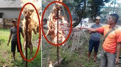 Terminate Indonesian soldier that barbecued dog for fun, posed for photos… Cool Poses, Stop Animal Cruelty, Poses For Photos, Animal Welfare, Animal Rights, Animal Rescue, Dog Abuse, Torches, Pet Stuff