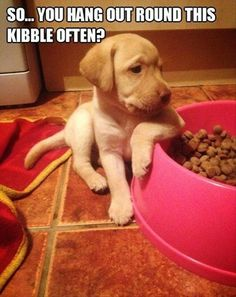 so you hang out round this kibble often? #socute #puppy