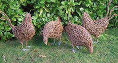Next willow challenge when I graduate from willow den making! Has to be the next best thing to having real chickens.
