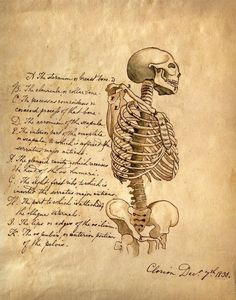 11x14 Vintage Anatomy Skeleton with Science text by curiousprints, $15.00