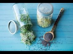 How to Make Broccoli Sprouts