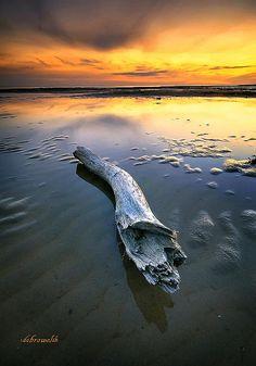 """Always a drifter,"" Baltic Sea, Estonia.  Photo: hotonpictures, via Flickr"