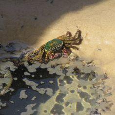 A fab shot of a Fraser Island local shared by Heidi P  #fraserexplorer #fraserisland #queensland #australia www.fraserexplorertours.com.au