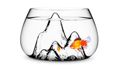 Love this fishbowl. We keep a fighting fish in ours and our son loves it.