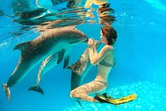 SWIM WITH THE DOLPHINS - Anelia Resort & Spa - Hotel in Mauritius