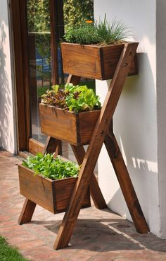 Fotografia de Horta em casa por Ana Camila Vieira #924930.