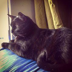 Stark_de_domingo.jpg - gato descansando