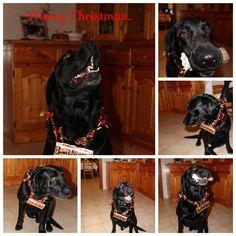 My dog for Christmas...