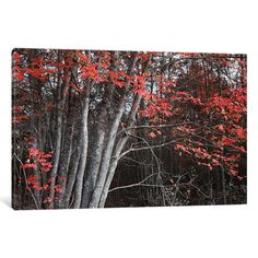 "Loon Peak Arboles Acadia II Photographic Print on Wrapped Canvas Size: 12"" H x 18"" W x 1.5"" D"