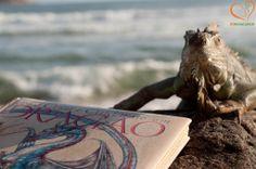 """Como Criar e Cuidar De um Dragão http://www.beanimal.com.br/index.php/2013/12/04/como-treinar-e-cuidar-do-seu-dragao-how-to-raise-and-keep-a-dragon/ great #suggestion for gifts, but only for #adventurous #children the #book """"How to raise and keep your dragon"""" / uma ótima #sugestão para #presentes, mas só para #crianças de #coragem. O #livro """"como criar e cuidar do seu dragão"""" #dragon #dragão #lizard #lagarto #tegu #teiú #iguana #pet #petlizard #BemEstarAnimal #animalwelfare…"""