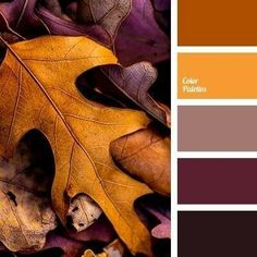 Beautiful Fall Color Palette Ideas Fall is among the most well-known times with some event will happen in this season. And you may repaint your home interior with suitable fall color palette. It is just one of those seasons thatR… Fall Color Schemes, Color Schemes Colour Palettes, Fall Color Palette, Colour Pallete, Color Combos, Fall Paint Colors, Purple Palette, Autumn Colours, Color Tones
