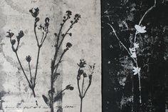 botanical monoprints.