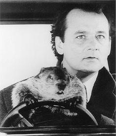 Bill Murray en el Dia de la Marmota