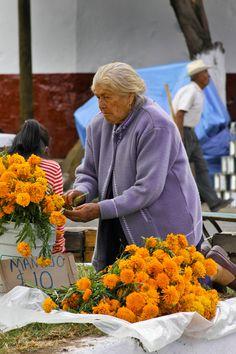 https://flic.kr/p/9pMzLo | Cempaxóchitl | Tagetes erecta, llamada comúnmente tagete o clavelón de la India, conocida en México como cempasúchil, cempaxóchitl, cempoal (o zempoal), flor de muertos o clavel chino, es una especie de la familia Asteraceae, nativa de México, donde se encuentra en estado silvestre principalmente en los estados de Chiapas, Estado de México, Morelos, Puebla, San Luis Potosí, Sinaloa, Tlaxcala, Oaxaca y Veracruz. También se encuentra en los países de América…