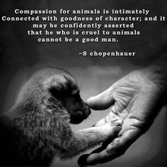 #Compassion for #animals.... #quote