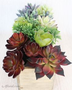 Create succulent cen