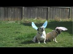 Easter Bunny Q & A - I bet you didn't know this about the Easter Bunny :) Brought to you by http://www.DogQuality.com #easter #easterbunny