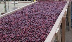 Natural process on African beds. Amazing sweetness and fruit flavors come out of the coffee that goes through this simple process.