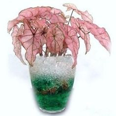 Crystal Soil Gel Water Beads for Plants and Flowers