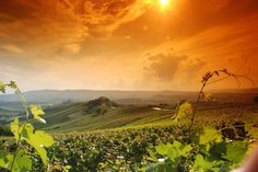 Barolo Wine Country via Culture Discovery Vacations
