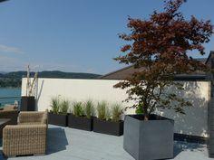 Japanischer Ahorn auf einer Dachterrasse Klagenfurt, Gardening, Plants, Roof Terraces, Lawn And Garden, Plant, Planets, Horticulture