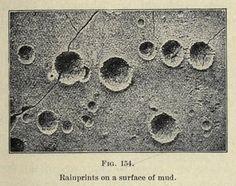 nemfrog:Fig. 154. Rainprints on a surface of mud. Elementary...