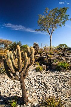The Caatinga