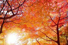 Fire/Light (Elaine loves autumn trees)