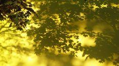 """Polubienia: 1, komentarze: 1 – @zenobiazgryz na Instagramie: """"#photo #shadows #trees #leawes"""""""