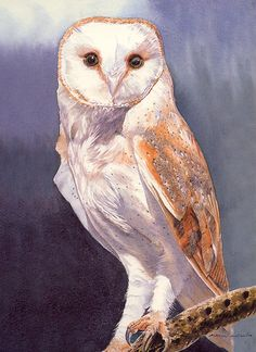 Barn Owl watercolour painting by MarcWinArt on Etsy, £250.00