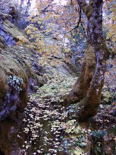 Silencioso cair das folhas no outono.