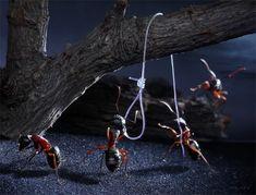 Mises en scènes de fourmis