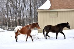 Stables in winter