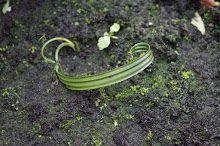 Dattel - vom Kern zur Pflanze