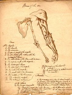 More anatomical imagery from the U.S. National Library of Medicine's archives. This image plays the role of Victor Frankenstein's notes as he learns from an experienced Edinburgh anatomist in #frankensteinapp (depending on whether you advise Frankenstein that he should indeed take this medical course!)