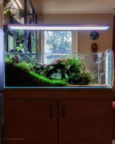It's the answer Nano Planted Tank Design Inspirations to Displayed at the Office that Realising a High Stress Tropical Fish Aquarium, Nature Aquarium, Planted Aquarium, Fish Aquariums, Aquarium Systems, Nano Aquarium, Aquarium Design, Shrimp Tank, Nano Tank
