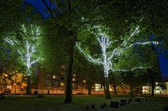 MG_2938a-tree-lights.jpg (1280×854)