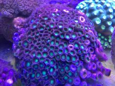 Coral Aquarium, Amethyst, Texture, Rock, Crystals, Crafts, Surface Finish, Manualidades, Skirt