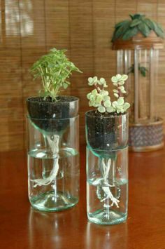 Wine bottle cut and turned into planter