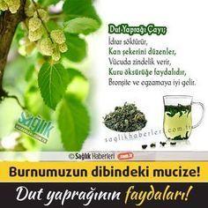 Evimizin bahçesinde ve burnumuzun dibindeki bu mucizenin faydalarından haberdar mısınız? İşte dut yaprağının mucizevi faydaları ve dut yaprağı çayı tarifi! #sağlık #saglik #sağlıkhaberleri #health #healthnews #dut #dutyaprağı @saglikhaberleri