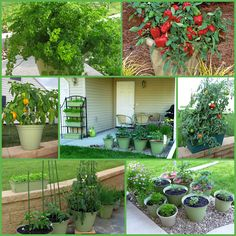 The Iowa Housewife: Container Kitchen Gardens