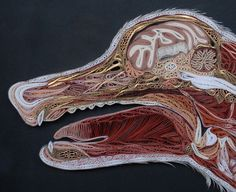 Lisa Nilsson - Canis lupus familiaris (detail). Anatomical Cross-Sections in Paper. #quilling #art