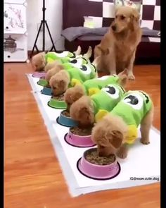 Meal Is Ready For cute Puppies - Süße tiere - Animals Cute Funny Animals, Cute Baby Animals, Funny Cute, Funny Dogs, Animals And Pets, Cute Puppies, Cute Dogs, Dogs And Puppies, Doggies