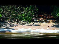 Educação Ambiental - Água - YouTube