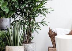 14 beste afbeeldingen van Badkamer planten - Kamerplanten, Badkamer ...