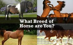 Quiz:+What+Breed+of+Horse+are+You? Hahaha turns out I'm a Clydesdale the perfect kinda horse
