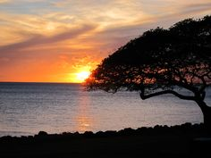 Monkey pod tree at sunset on Maui - Kaanapali Beach 2011