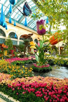 Abloom at Bellagio's Conservatory&Botanical Gardens